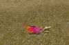 phoenix-boden-sitzend